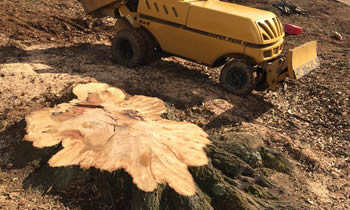 Stump Removal in Worcester MA Stump Removal Services in Worcester MA Stump Removal Professionals Worcester MA Tree Services in Worcester MA