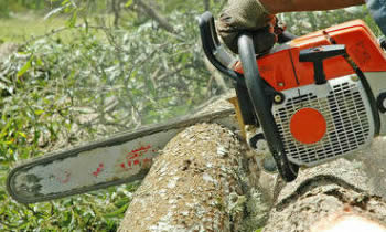 Tree Removal in Worcester MA Tree Removal Quotes in Worcester MA Tree Removal Estimates in Worcester MA Tree Removal Services in Worcester MA Tree Removal Professionals in Worcester MA Tree Services in Worcester MA