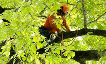 Tree Trimming in Worcester MA Tree Trimming Services in Worcester MA Tree Trimming Professionals in Worcester MA Tree Services in Worcester MA Tree Trimming Estimates in Worcester MA Tree Trimming Quotes in Worcester MA