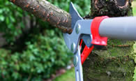 Tree Pruning Services in Worcester MA