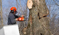 Tree Removal in Worcester MA